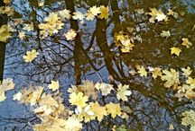 Seasons, nature