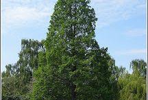 Edgewood Flora