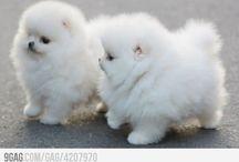 ANIMALS :)))