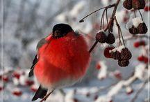 Любимые Птицы и животные