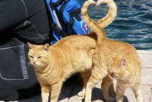 ♡ Cats ☆