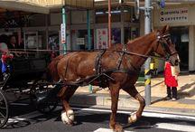 Picture of  Toki-city , Gifu-ken , Japan / event, festival, Tourist attraction, Gourmet, Culture, etc...