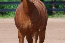 Horses / #Love Horses 4 Life