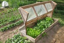 COLDFRAMES / by The Sustainable Life