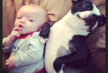 Boston Terriers And Babies / Who doesn't love Boston Terrier? Who doesn't love babies?