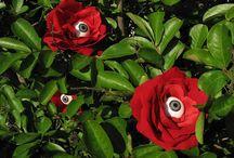 Eye Garden