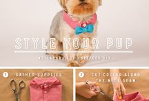 DIY Crafts for Shelter Pets / Easy DIY Crafts that can help shelters and shelter pets / by Dallas Animal Services