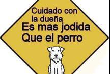 carteles perros