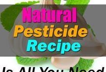 homemade pesticides to kill bugs in your garden and insects