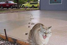 CAT!!!!