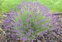 Zahrada - pěstování / kytky, zelenina