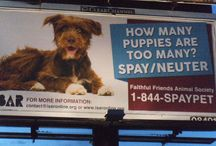 ISAR's Spay/Neuter Billboards in Action! / Visit ISAR's website, www.isaronline.org, to find out how you can participate in ISAR's Spay/Neuter Billboard Campaign!