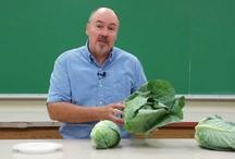 viedo's - veggies,gardening / by Connie Coyer
