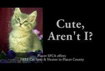 Spay & Neuter - We Can Help! / by Placer SPCA