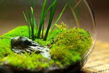 moss, plant, terrarium / plant