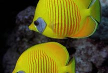 Colorful Tropical Fish / by Merry Ford