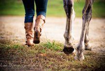 horse photo ideas