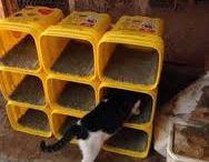cica játékok