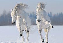 beatifull horse