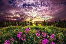 Tájképek / Tájak, Hegyek, Erdők és virágai