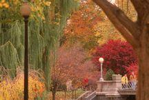Fall is my favorite season / by Jackie Schon