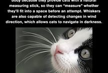 important cat facts [=^•~•^=]