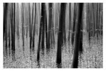 Ateliér 26 - fotoprojekt: silva magica / Série abstraktních fotografií, zobrazující les tak trochu jinak.  Les plný světla. Jasný, ponurý i magický, někdy barevný, jindy černobílý. Záleží, jakýma očima se zrovna díváte. Dokáže se měnit podle nálady, hraje si s našimi smysly, lechtá je, objímá a někdy se jim krutě vysmívá… Silva magica.