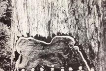 Logging | Vintage