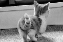 Pets That I Like!!