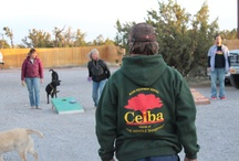 Ceiba Fun Page! / When Ceiba is not rigging trips, washing boats, or packing boxes we have fun!