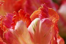 Garden Ideas / Flowers/shrubs/bulbs/food garden / by Kathy Page