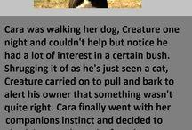 Brave animals
