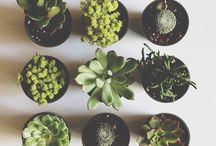 Flora / Gardening