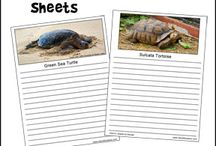 Turtle and Tortoise Crafts and Learning Activities