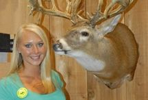 Whitetail deer / Big bucks