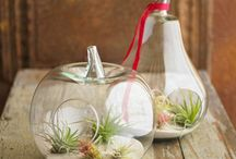 Air Plants / by Nancy Schupple