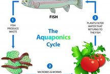 aquaponics