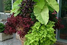 Container Plants Landscaping