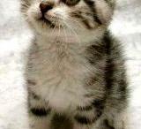 So Cute! / by Amy Misko