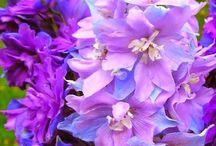 Szep viragok / Beautiful Flowers