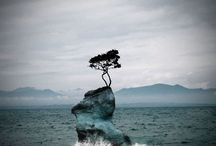 Lone Tree / by Linda Yoder