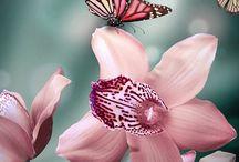Butterfly-kelebekler