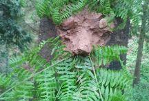 The World Outside / Forest School at Bodenham Arboretum