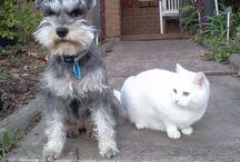 MUFFY & KIMBA.