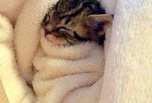 gaticos adorables