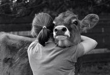 I love animals!!!