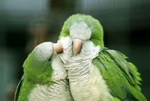 A - Pássaros e Aves / Pássaros, casinhas e comedouros. Um pouco de tudo.