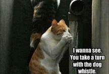 Cats.....I love them! / by Amanda Kuhr
