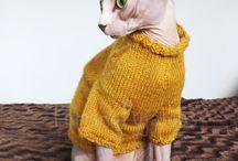 cats photos