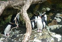 Doubtful Sound Wildlife